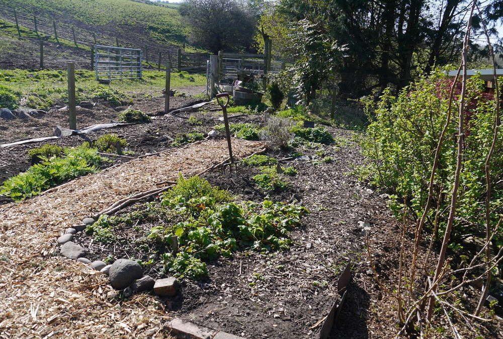 Sunny Afternoons at the Blackford Glen Medicine Garden