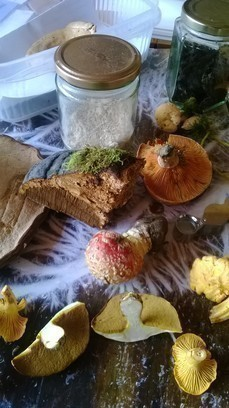 Medicinal Fungi Series Coming up this month