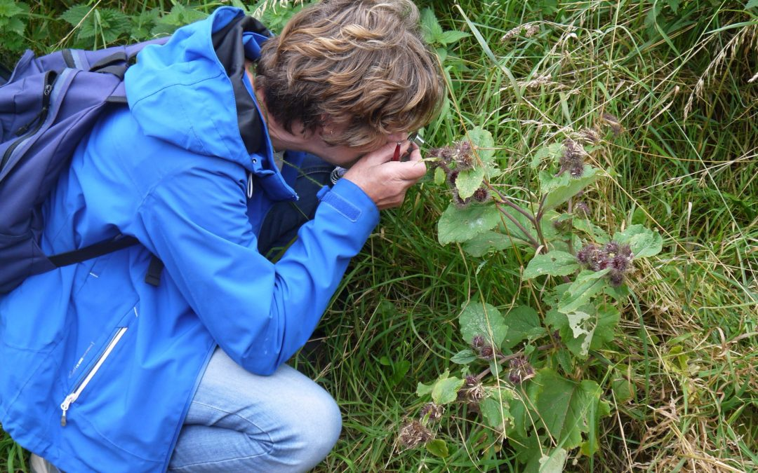 Wild Things: a year of wild food & medicine