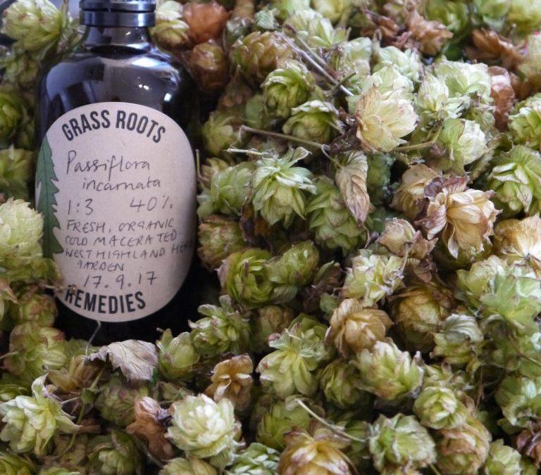 DIY: Rosehip & Elderberry Winter Syrup
